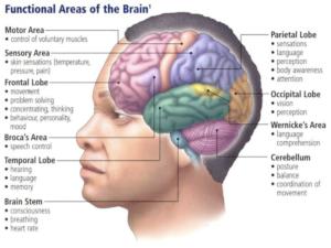 Insulinsjokk og effekt på hjernen